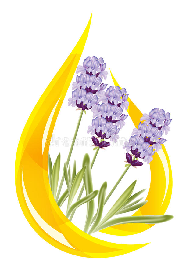 A drop of lavender essential oil. stock illustration