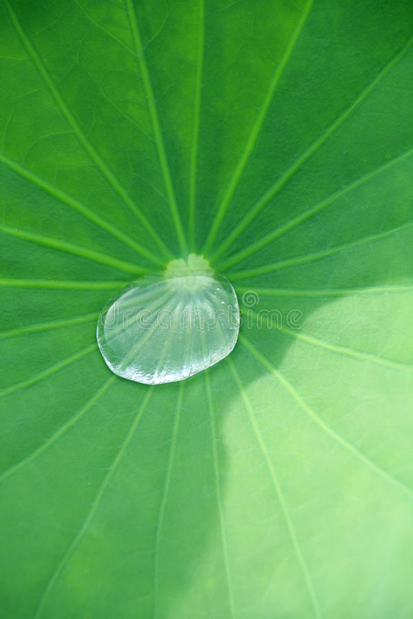 Download Drop and leaf stock image. Image of tranquil, green, background - 14860955