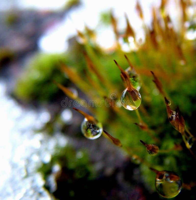 drop plant στοκ εικόνες με δικαίωμα ελεύθερης χρήσης