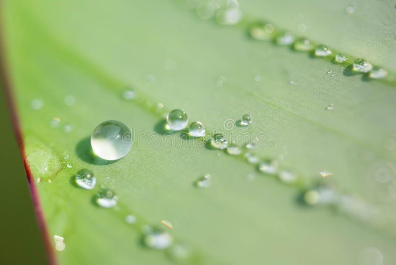Drop of water on a blade of grass. Close up royalty free stock photography
