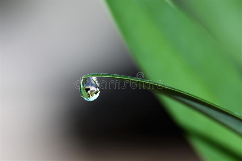 Drop of water on blade of grass royalty free stock photography