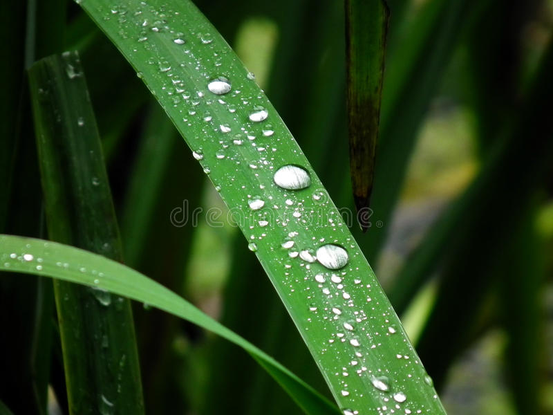 Drop of water on a blade of grass. Macro stock photo