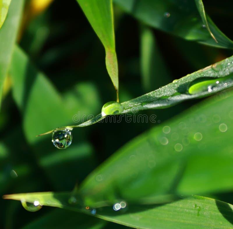 Drop of water at corner. Nature, macro, morning royalty free stock photos