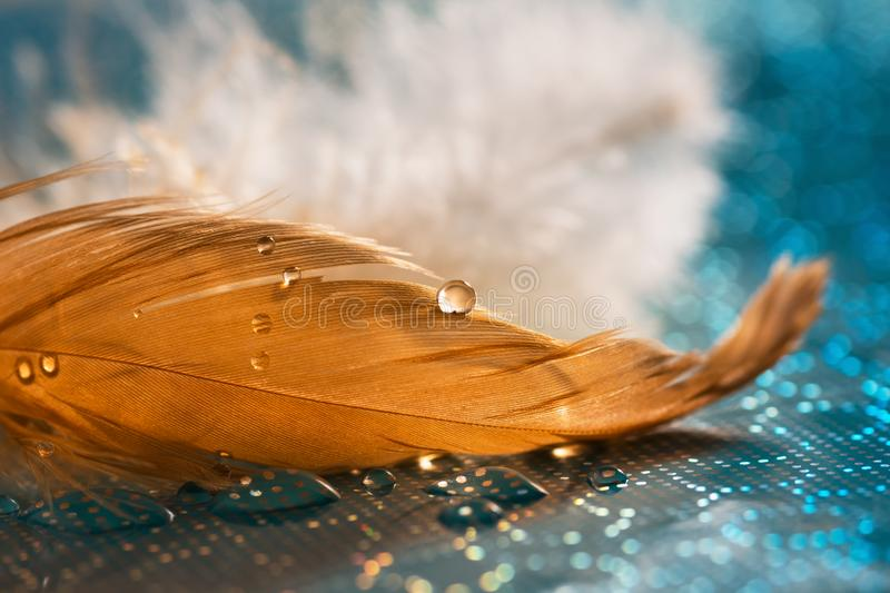 A drop of water or dew on a golden feather, an aquamarine background. Beautiful artistic image, abstract macro. Selective focus. royalty free stock photography
