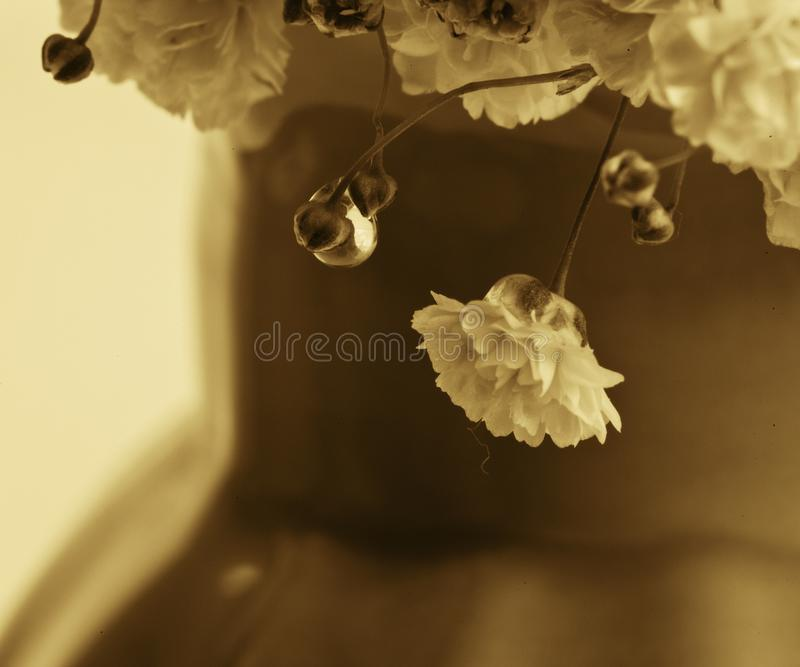 Drop of water on the flowers royalty free stock image