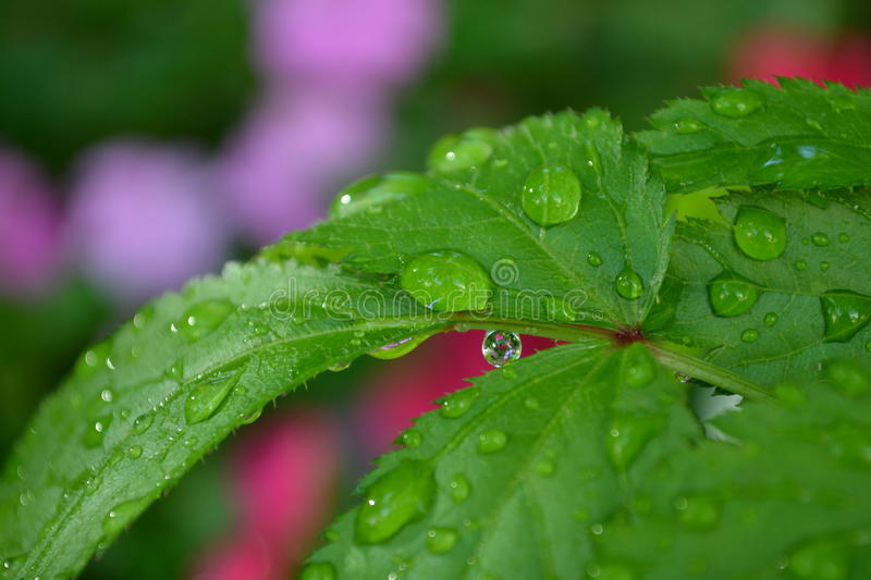 Download Drop stock image. Image of leaf, garden, rain, nature - 39511571