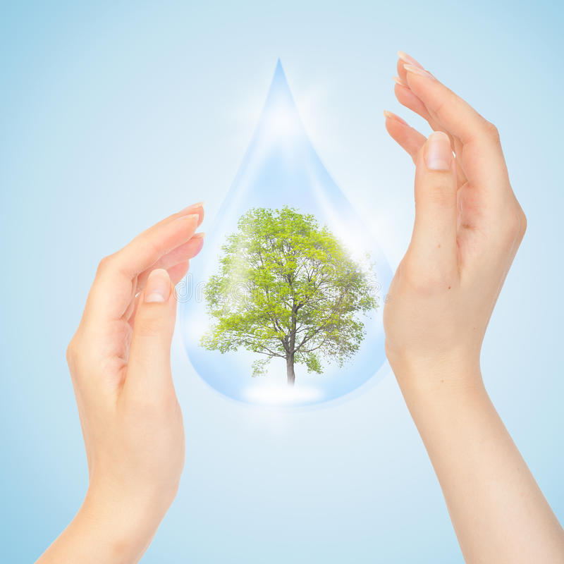 Drop Of Water With Tree Inside And Hands Stock Photo