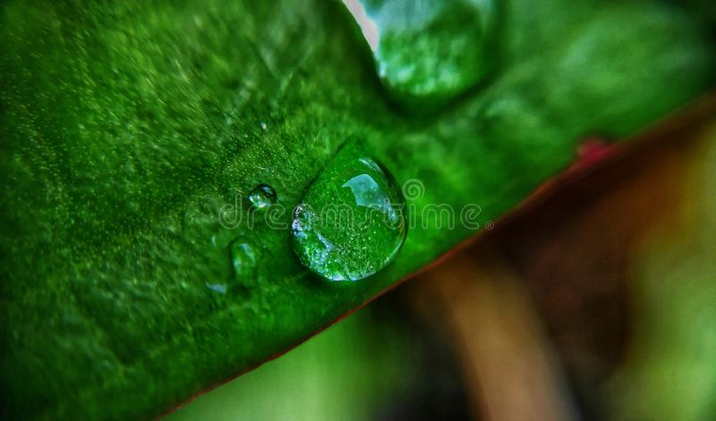 droplet royaltyfri fotografi