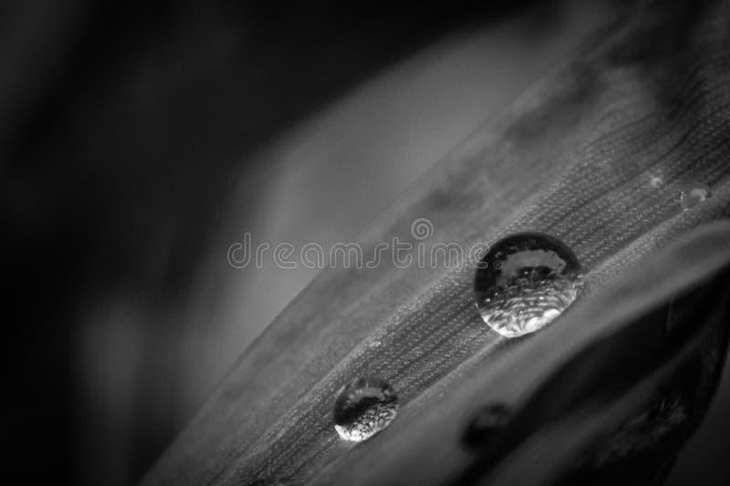 droplet arkivbild