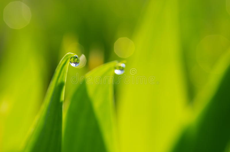 Droplet of Dew