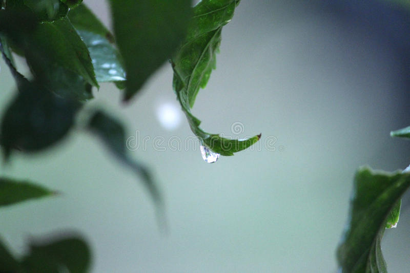 Droplet..!! royalty free stock image