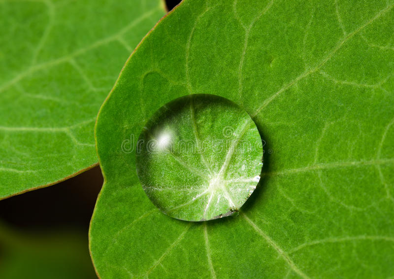 Droplet on leaf. Drop of clean water on a fresh green leaf stock image