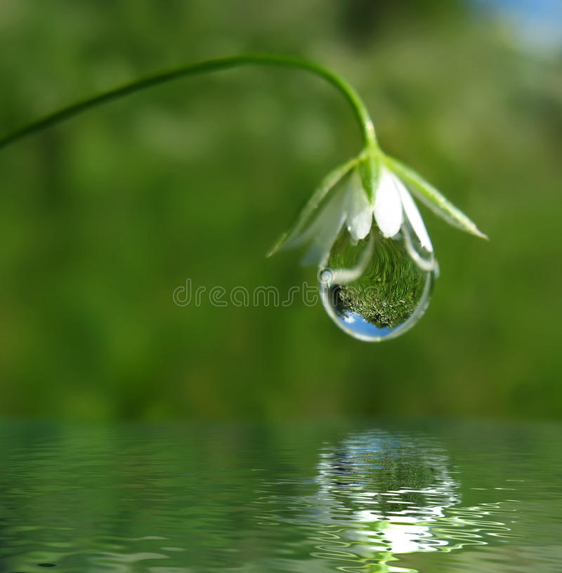 Free Droplet On Flower Stock Images - 12851754