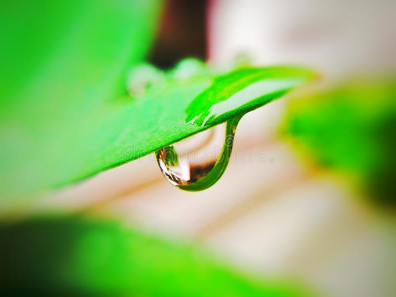 Droplet.  is a reinvention of the way plants get water. Using the latest technology in robotics royalty free stock photography