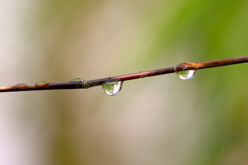 Download Droplet on twig stock photo. Image of drop, greenery, close - 10072
