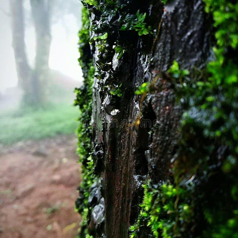 droplets fotografering för bildbyråer