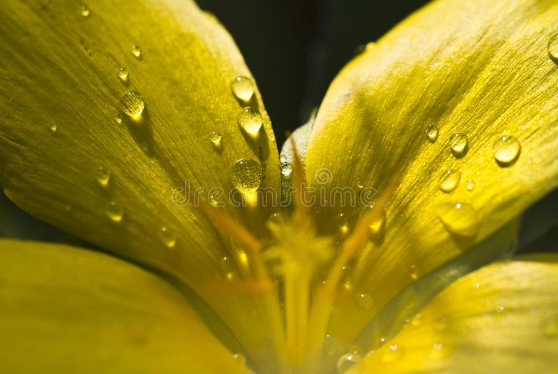 Download Droplets on Flower Petals stock image. Image of closeup - 23678991