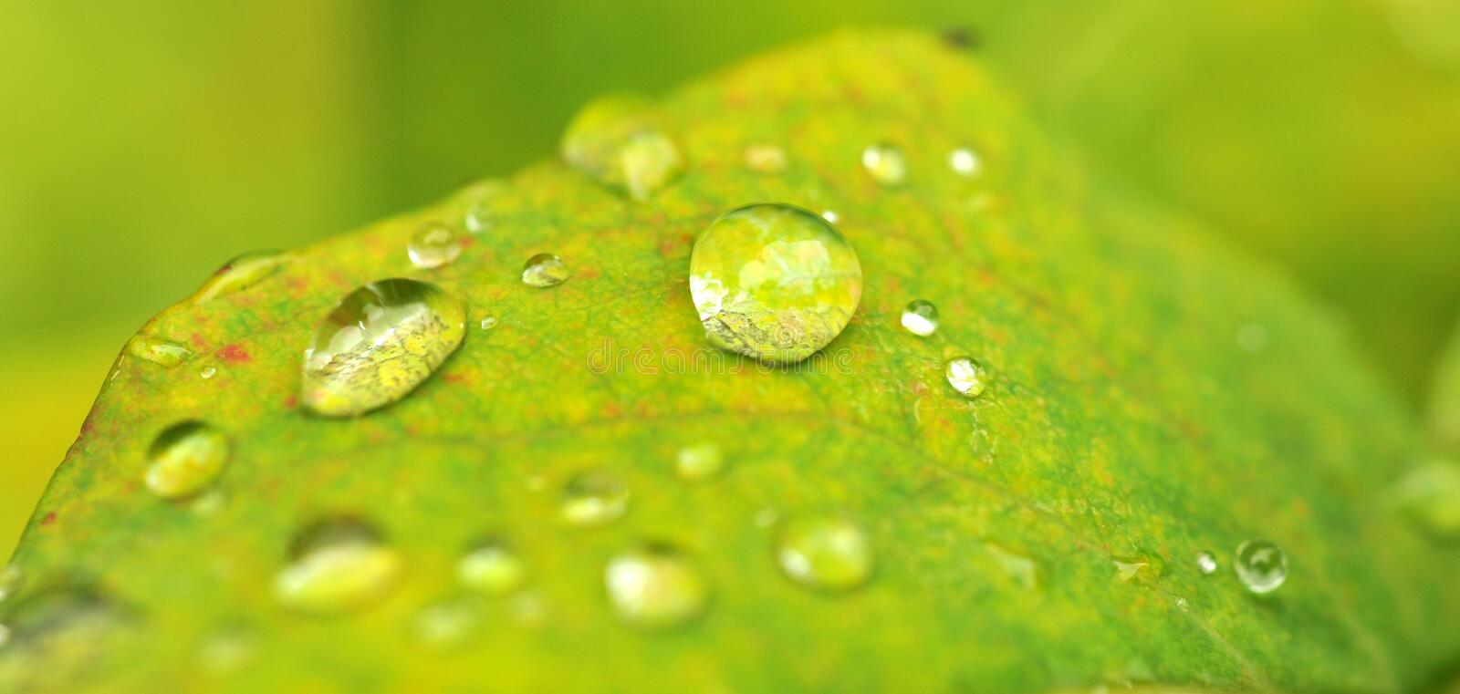 Droplets on green royalty free stock images