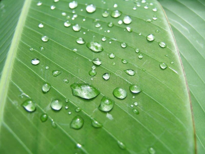 Droplets on a leaf stock image