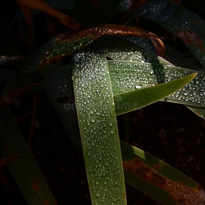 droplets royaltyfri bild