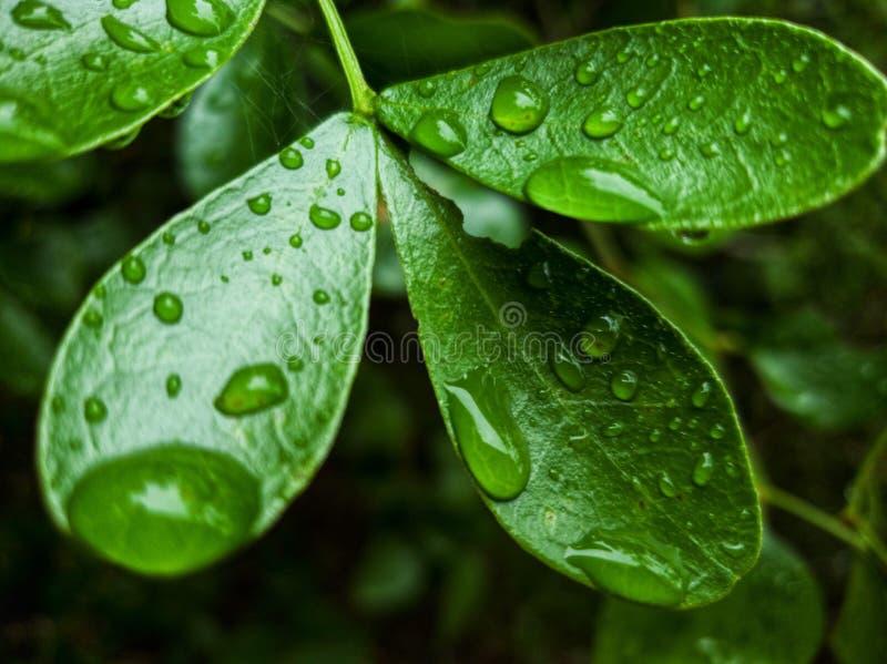droplets royaltyfria foton