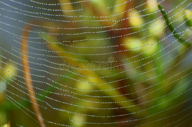 Download Droplets spider web stock image. Image of dewdrop, diamonds - 22691209