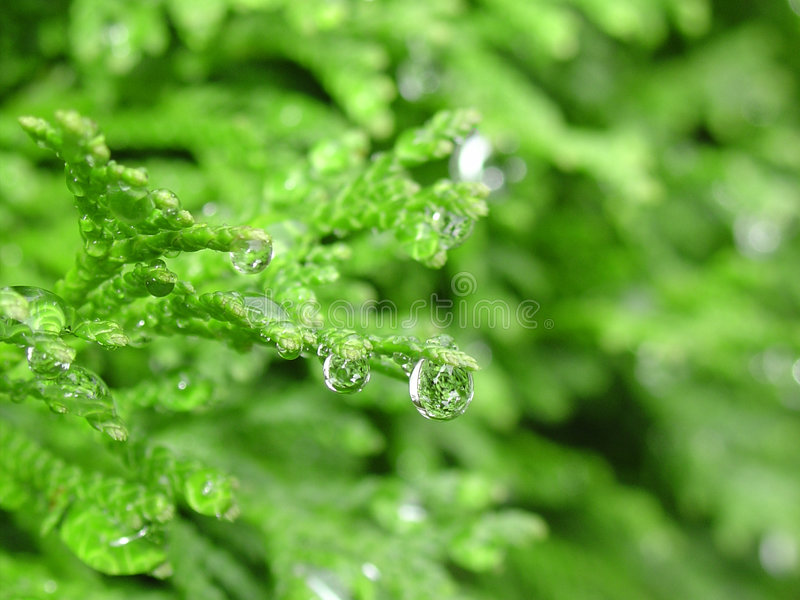 Download Droplets of water stock photo. Image of tiny, drops, green - 278892