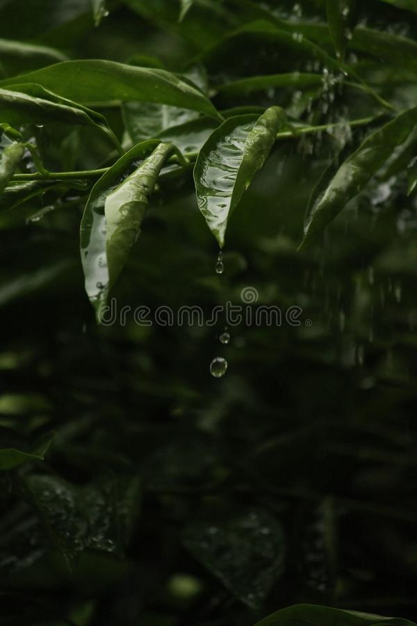 Droplets of Water royalty free stock photo