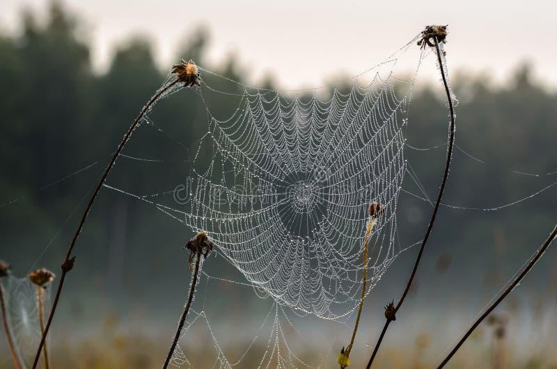 Droppar av dagg på en spindelrengöringsduk arkivfoton