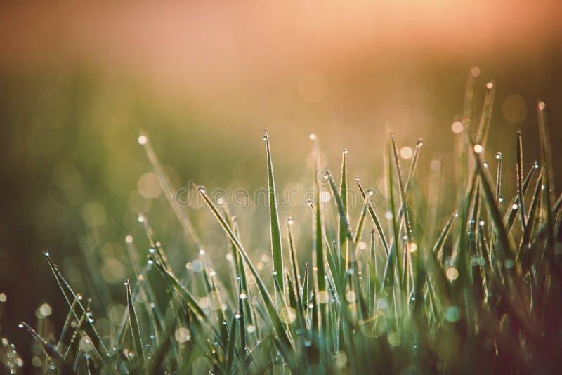 Droppar av den nya morgondaggmakroen i h fotografering för bildbyråer