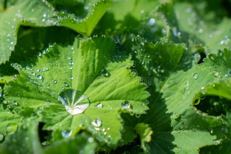 Droppar av vatten på sidor i morgonen med solljus royaltyfri bild