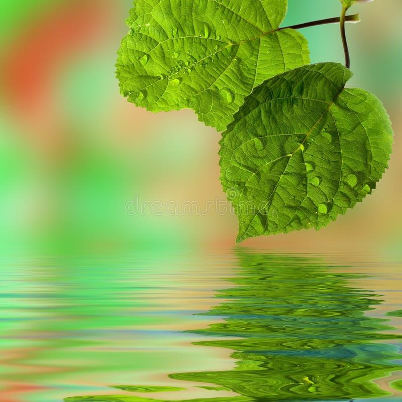 droppar blad växtvatten arkivbilder