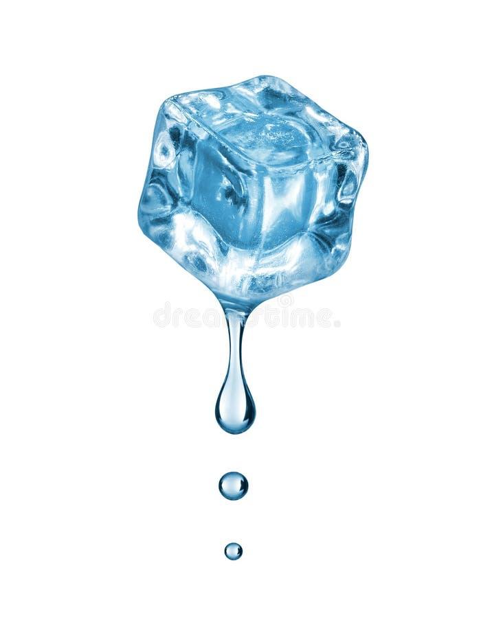 Droppar faller ner från iskuben på vit bakgrund royaltyfri foto
