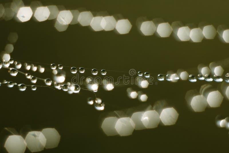 droppar little regn arkivbilder
