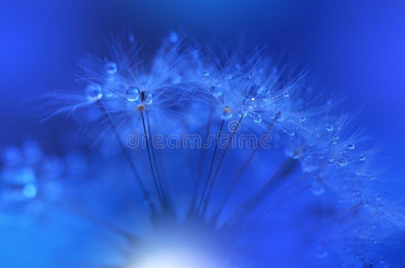 Droppar på den blom- bakgrundscloseupen Stillsamt abstrakt closeupkonstfotografi Tryck för tapet Blom- fantasidesign arkivfoton