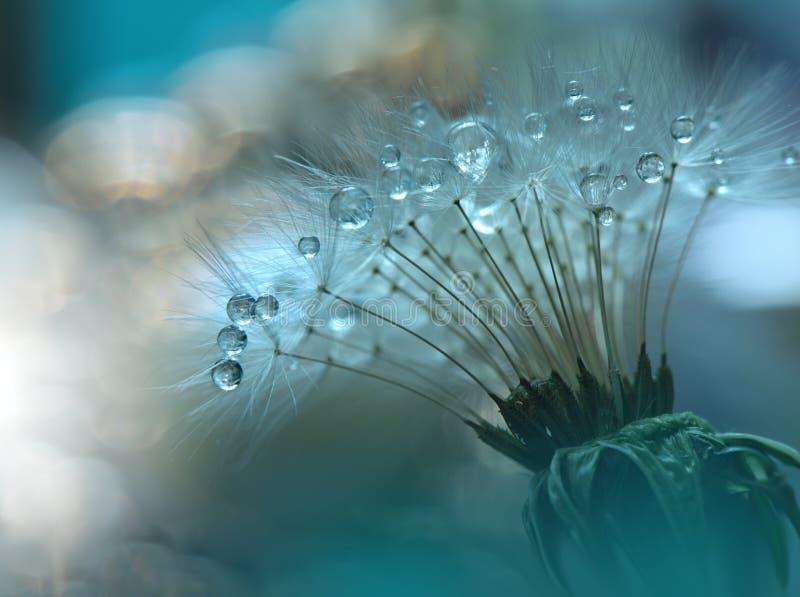 Droppar på den blom- bakgrundscloseupen Stillsamt abstrakt closeupkonstfotografi Tryck för tapet Blom- fantasidesign