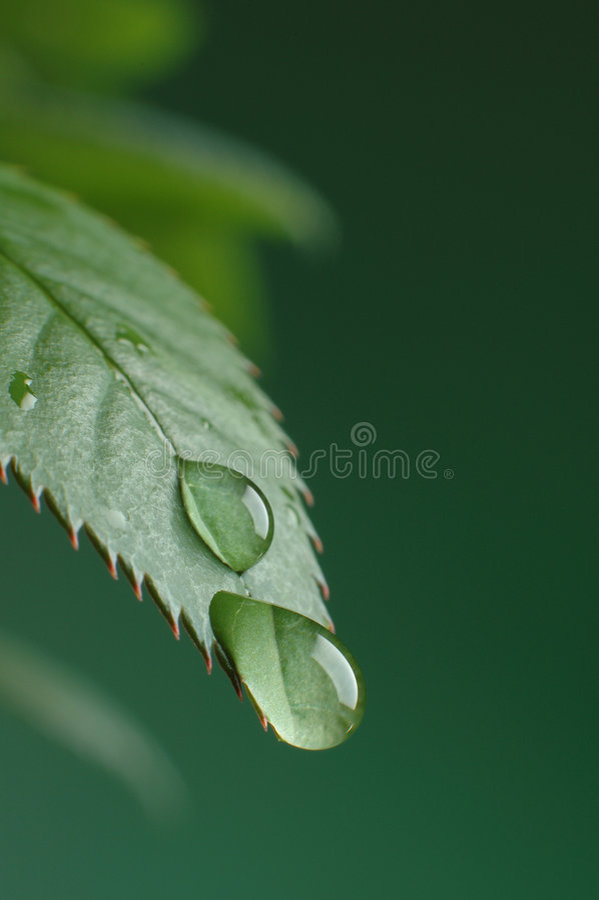 droppe