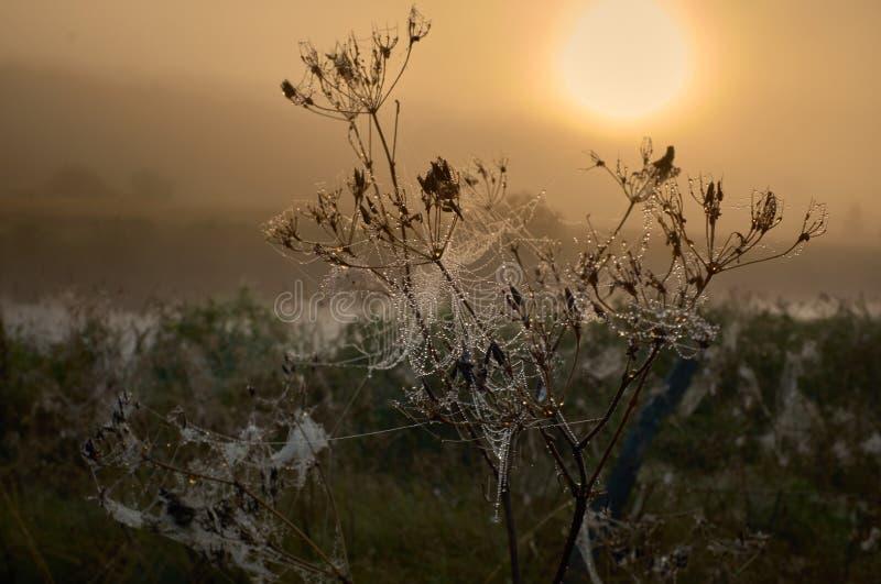Droppe av dagg på en spindellinje under lugna soluppgång arkivbild