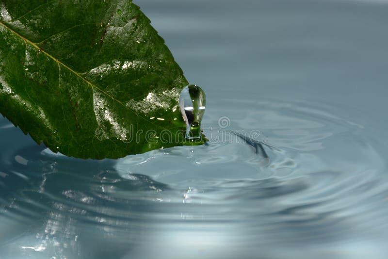 Droppe av rent vatten med det gröna bladet royaltyfri fotografi