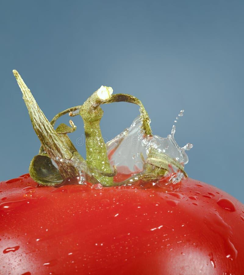 Droppe av vatten och tomaten royaltyfri fotografi