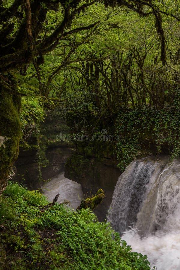 Droppe för Martvili kanjonvatten arkivbilder