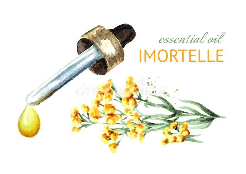 Droppe för nödvändig olja för Sandless immortelle Gul blommaHelichrysumarenarium medicinal växt Dragen illustration för vattenfär royaltyfri illustrationer