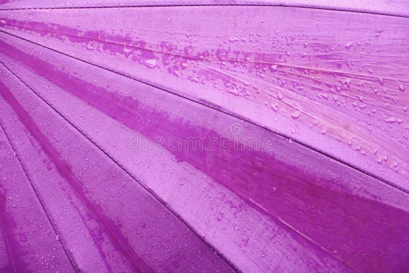 Droppe för regnvatten på purpurfärgad paraplybakgrund med kopieringsutrymme för tillfogar text arkivbild