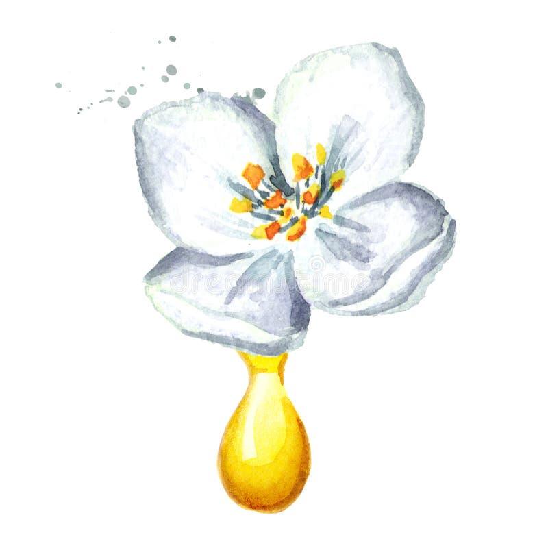 Droppe för vit jasminblomma och för nödvändig olja aromatherapy brunnsort Utdragen illustration för vattenfärghand som isoleras p stock illustrationer