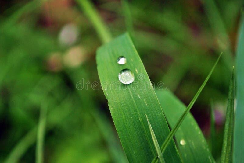 droppe fryst vatten royaltyfri bild