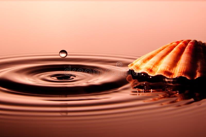 Droppe med skalet fotografering för bildbyråer