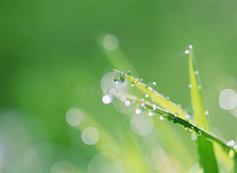 Download Droppvatten fotografering för bildbyråer. Bild av växter - 246481