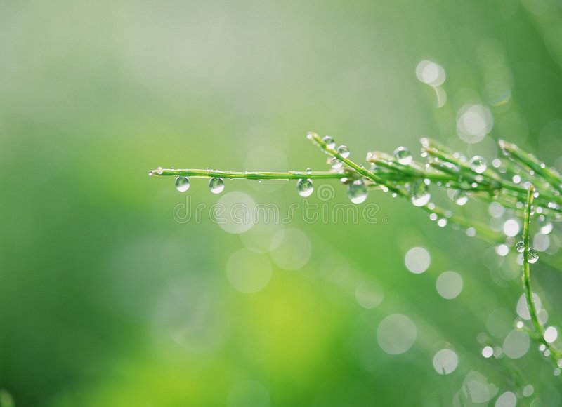 Download Droppvatten arkivfoto. Bild av fält, bevattning, vatten - 246490
