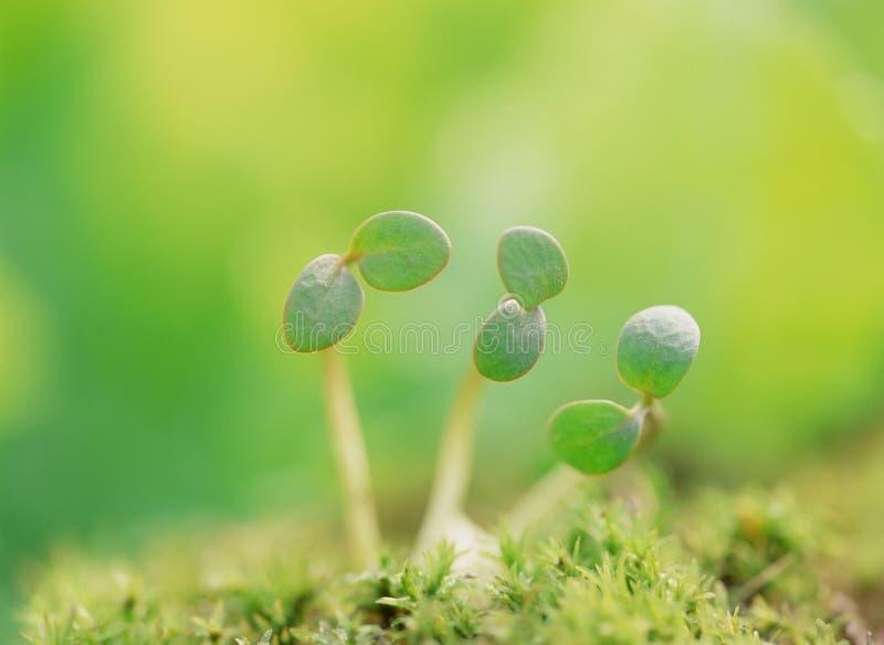 Download Droppvatten arkivfoto. Bild av morgon, trädgård, lantgård - 248142