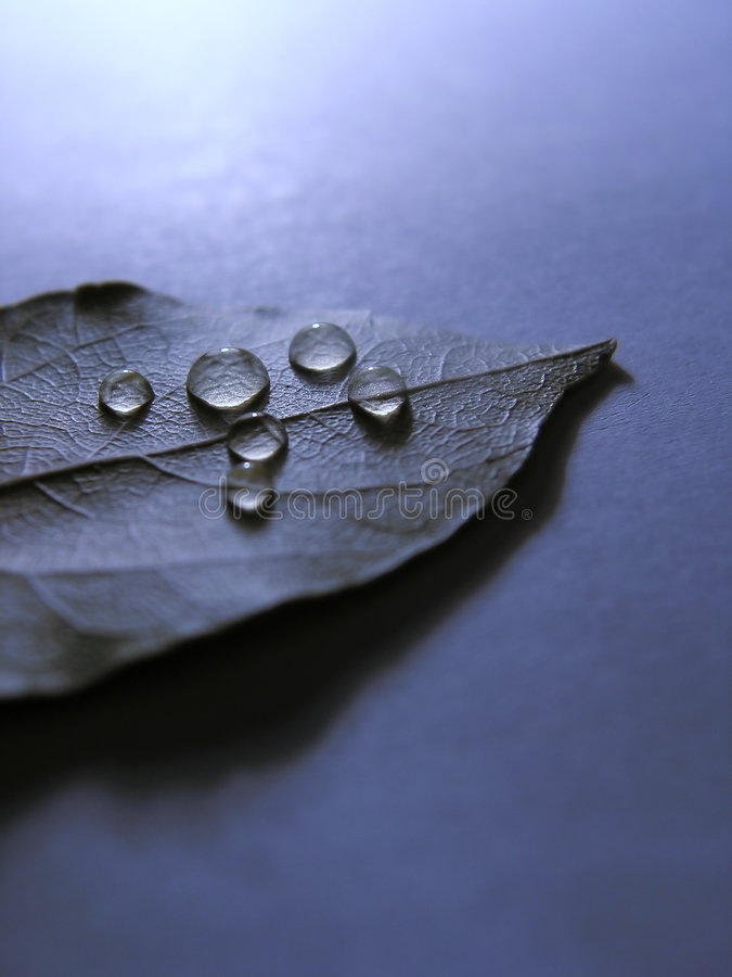 Download Drops stock photo. Image of leaf, park, drops, rain, tree - 109514